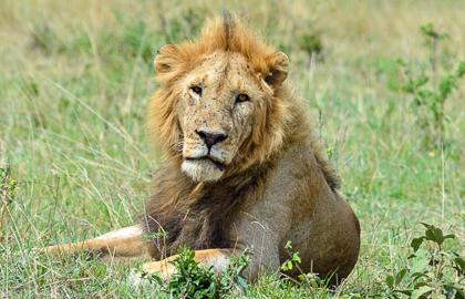 Masai Mara NP - Game drive