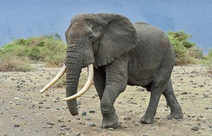 Ikoma to Karuta - Ngorongoro NP