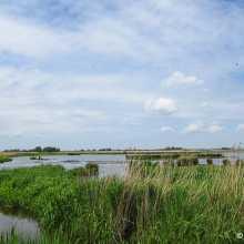 Zevenhoven - Groene Jonker
